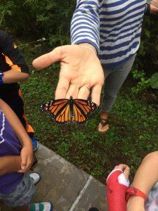 Great Monarch Beginnings 7