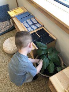 Caring for a plant