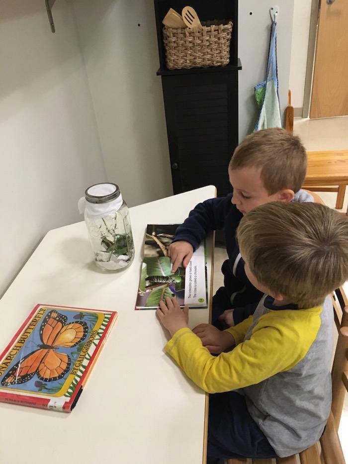 The Montessori Guide: Reality vs. Fantasy 2