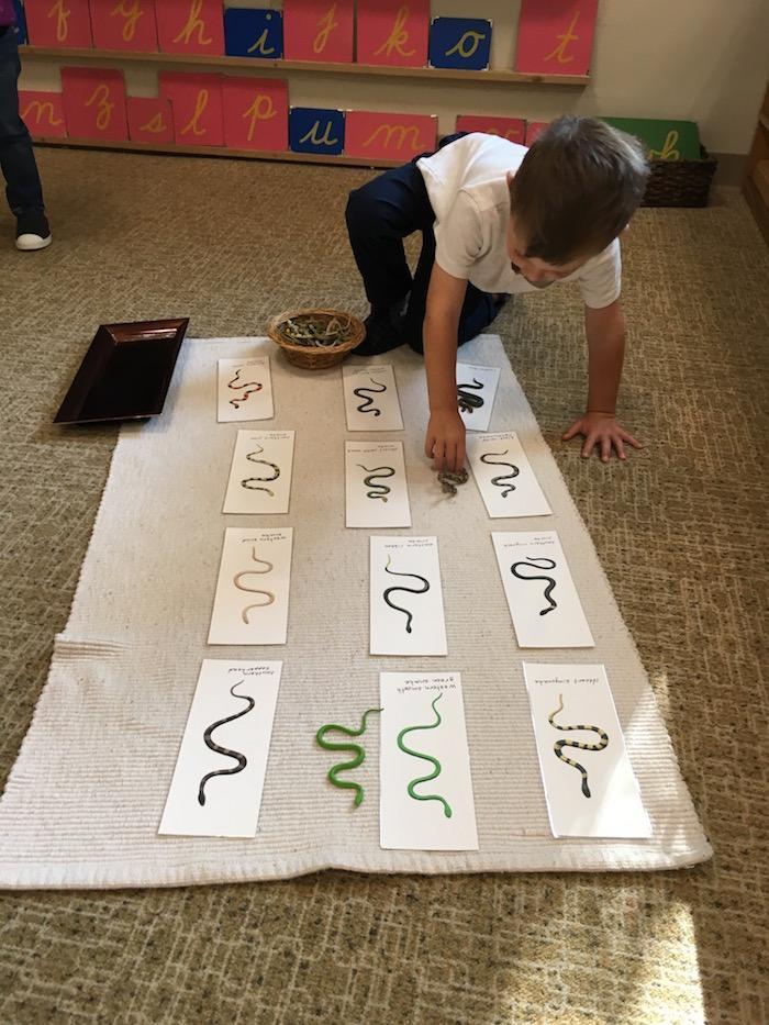 The Quest Montessori Day: Primary 10