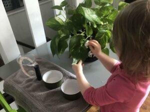 Child Plant Care