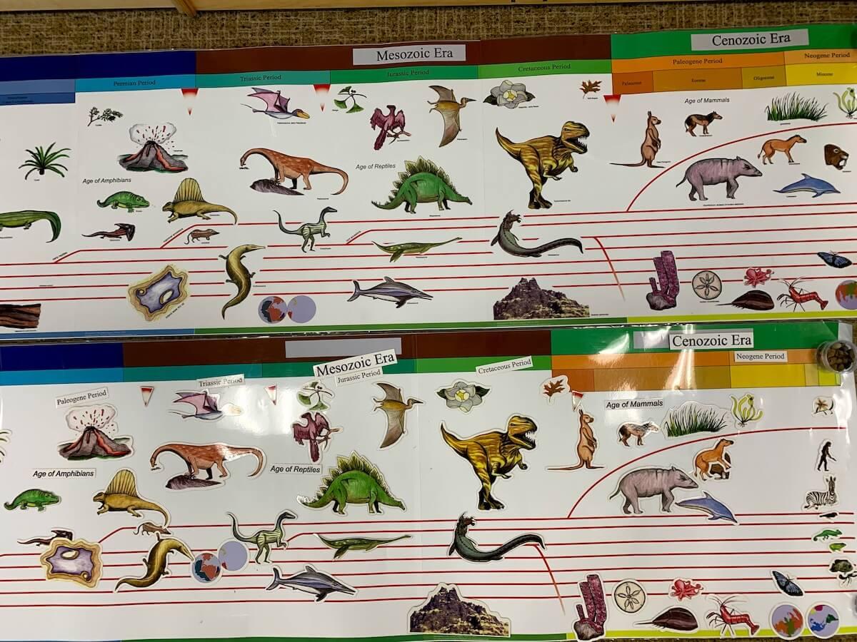 Montessori Great Work The TiMontessori Great Work The Timeline of Lifemeline of Life